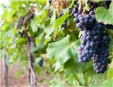 既爱旅游又爱葡萄酒的你,何不来一场葡萄酒之旅?