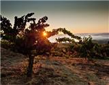 """山脊酒庄是美国加利福尼亚州的一座著名酒庄,以其出产的蒙特贝罗酒而闻名。本文将介绍有关该酒庄的10个""""真相""""。"""