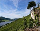 """德国的雷司令葡萄以其高品质在近年来受到人们青睐,也深受各大侍酒师的喜爱。本文带您领略两位德国""""雷司令大师""""——杜荷夫和露森的风采。"""