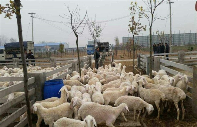 <br />                 夏季到了,也是到了羊增膘的最佳季节了,很多农户朋友会选择在夏季带羊出去放牧,让羊自己觅食。虽然外面的草料是营养最丰富的时候,但是如果不注意的话会导致羊患病,极其麻烦。那么在夏季羊的常见病有哪些呢?发病原因是什么呢?又该怎样去防治呢?一起来看看吧。<br /> <br /> 1、腐蹄病<br /> 发病原因:夏季是高温多雨的季节,而且天气变化无常,导致羊舍内潮湿,使羊容易患上此病。主要原因是由于饲料中的钙磷等物质不平衡,脚蹄角质疏松,经过雨水浸泡后软化,而且在放牧过程中脚蹄被石子玻璃等物质刺